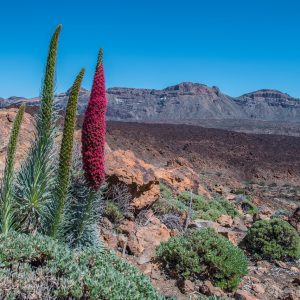 Must-see places Tenerife